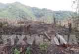 Thu hồi 88 dự án chuyển đổi rừng, đất rừng sai mục đích