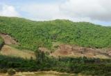 Phù Mỹ (Bình Định):Thực hư cán bộ xã bị tố lấn chiếm đất rừng?