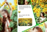 Phá hoại xong quay ra chụp ảnh 'nude' để bảo vệ hoa hướng dương