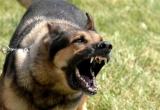 Có khởi tố… vụ con chó cắn chết người tại Thanh Hóa?