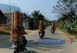 Thâm nhập 'điểm nóng' nghiến lậu hoành hành tại Tuyên Quang