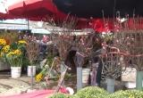 Hà Nội: Đào Tết được bày bán sớm tại chợ Quảng An