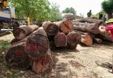 """Bộ đội Biên phòng lên tiếng vụ Bộ Công an bắt trùm gỗ lậu Phượng """"râu"""""""