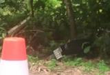 Bình Dương: Tông vào bụi cây ven đường, nam thanh niên tử vong tại chỗ