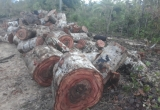 Đắk Lắk: Đốt gỗ tang vật và kiểm lâm, đốt luôn cả mình