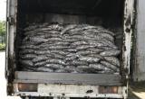 Bắt xe tải vận chuyển 3,5 tấn cá thối đang trên đường đi tiêu thụ
