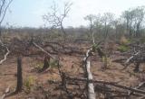 Điều tra vụ phá 7,3ha rừng ở Gia Lai