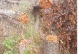 Khởi tố vụ phá hơn 7,3ha rừng ở Gia Lai