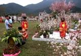 Rực rỡ sắc hoa Anh Đào giữa núi rừng Yên Tử