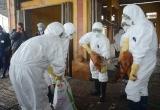 Hà Tĩnh ghi nhận thêm ổ dịch cúm gia cầm