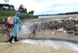 Quảng Ninh ghi nhận ổ dịch cúm gia cầm