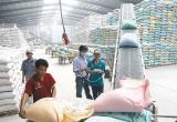 Nhiều hợp đồng xuất khẩu gạo lớn được ký kết