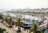 Quảng Ninh: Cương quyết xử lý các tàu du lịch vi phạm quy chế hoạt động