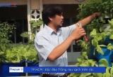 TP HCM: Độc đáo mô hình trồng rau trên rác