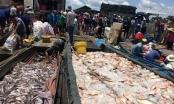 Vụ 340 tấn cá bè chết trắng trên sông La Ngà: Công an vào cuộc điều tra
