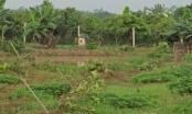 Hưng Yên: Kẻ gian nào phá hoại 3 sào cây ăn quả của người dân trong đêm?
