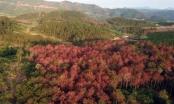 Lâm Đồng yêu cầu ngăn chặn, xử lý các vụ phá rừng