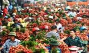 Slide - Điểm tin thị trường: Việt Nam xuất khẩu vải, nhãn đứng thứ 2 thế giới