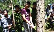 Lâm Đồng: Bắt thêm đối tượng trong vụ phá hơn 10ha rừng thông