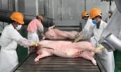 Slide - Điểm tin thị trường: Nhập khẩu thịt heo tăng hơn 6 lần