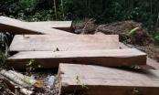 Gia Lai: Bắt quả tang đối tượng khai thác gỗ trái phép