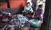 Rộ tình trạng thương lái thu mua vảy cá
