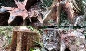Vợ giám đốc Công ty Lâm nghiệp Ka Nák chiếm dụng 1,3 ha rừng