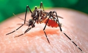Đắk Lắk: Ghi nhận thêm 1 trường hợp tử vong do sốt xuất huyết