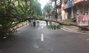 Hà Nội: Đang lưu thông trên đường, người đàn ông bị cây đổ vào người và tử vong tại chỗ