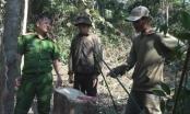 Đắk Lắk: Bắt quả tang nhóm lâm tặc ngang nhiên vào rừng chặt hạ gỗ trái phép