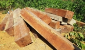Phát hiện nhiều bãi tập kết gỗ lậu ở Đắk Lắk