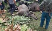 Hà Giang: Sét đánh 2 người bị thương, nhiều gia súc bị chết