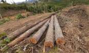 Hiện trường vụ phá hơn 2ha rừng ở Đam Rông