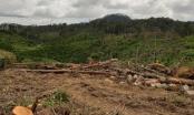 Lâm Đồng: Khởi tố vụ phá hơn 2ha rừng ở Đam Rông