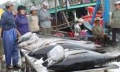 Slide - Điểm tin thị trường: Xuất khẩu cá ngừ sang EU, Trung Quốc giảm