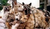 Clip - Băng nhóm 'cẩu tặc' trộm hơn 100 tấn chó tại Thanh Hóa khai gì?