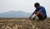 Tìm ra nguyên nhân khiến hơn 260 tấn ngao chết trắng bãi biển Hà Tĩnh