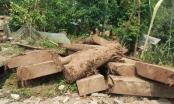 Điện Biên: Dừng bán đấu giá tang vật gỗ nghiến, hạn chế hợp pháp hóa lâm sản