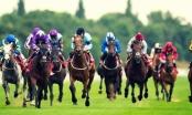 Slide - Điểm tin thị trường: Trường đua ngựa đầu tiên tại Thủ đô dự kiến hoạt động từ năm 2020