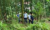 Nhiều uẩn khúc trong vụ Phó chủ tịch xã chết trong rừng ở Bắc Giang