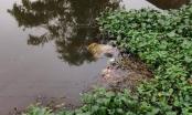 Đến bờ kênh bàng hoàng phát hiện thi thể người đàn ông nổi lên
