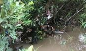 Yên Bái: Tá hỏa phát hiện thi thể người đàn ông dưới suối, trên người có nhiều vết chém