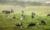 Slide - Điểm tin thị trường: Vinamilk mua công ty mẹ của Sữa Mộc Châu