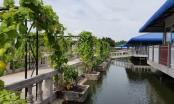 Liên tục bị huyện Vĩnh Thuận rải đinh, doanh nghiệp kêu UBND tỉnh Kiên Giang cứu?