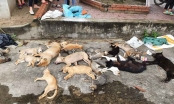 Hai anh em ruột trộm chó bằng thủ đoạn tàn độc bị cả làng vây bắt