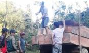 Gia Lai: Khởi tố đối tượng vận chuyển gỗ lậu, chống người thi hành công vụ