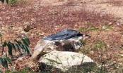 Phát hiện thi thể đang phân hủy trong vali bên đường
