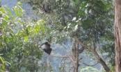 Nỗ lực bảo tồn và phục hồi các hệ sinh thái rừng trong VQG Chư Mom Ray