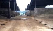 Công an Hà Tĩnh điều tra vụ lừa đảo tại đại dự án nuôi bò