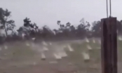Clip: Kinh hoàng mưa đá khổng lồ dội xuống cánh đồng tại Cao Bằng